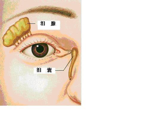奇妙的人体系列(3) 眼睛