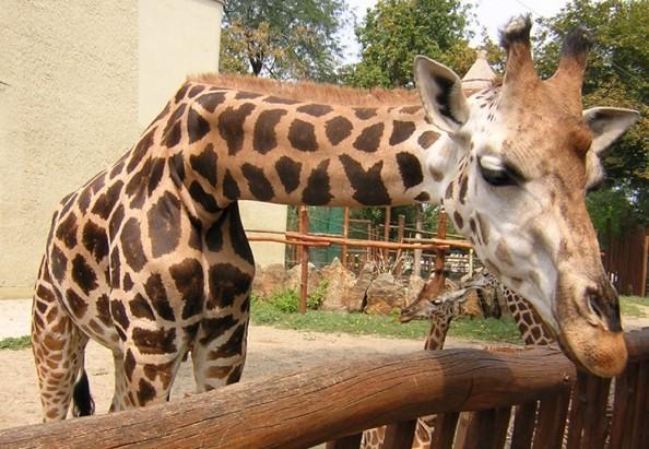世界十大特色动物园
