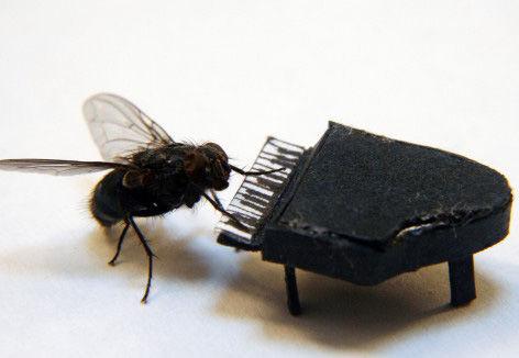 澳大利亚人为什么喜欢苍蝇