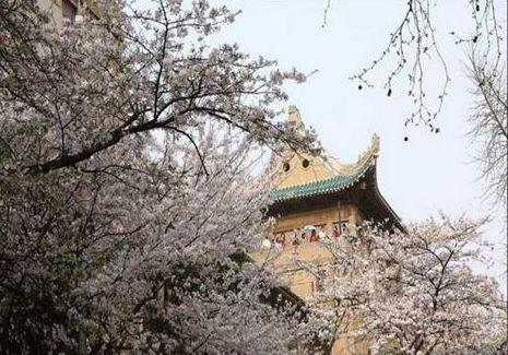 """请分享武汉大学""""樱花咏""""并""""珞珈山林中与导师共度端午"""""""