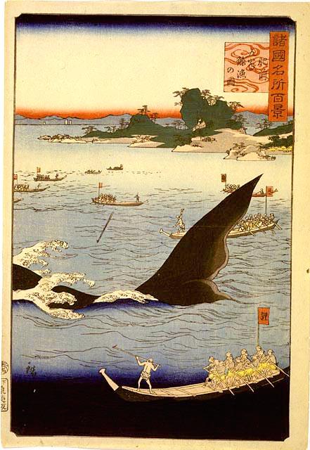日本为什么要捕鲸背后的玄机