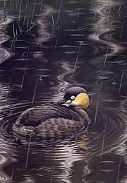 外来物种导致湿地鸟类濒临灭绝