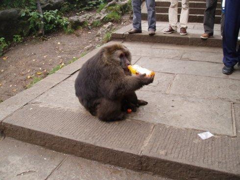 人与猴和谐的一面