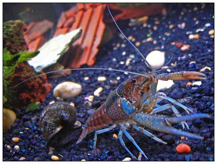 当我们谈论小龙虾时我们在谈论些什么
