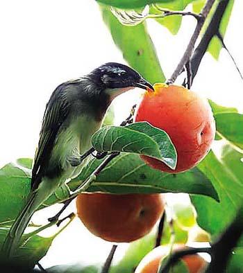 [Dr.You第66期获奖答案]鸟儿不爱吃树叶