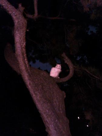一只奋力成为猫头鹰的小猫