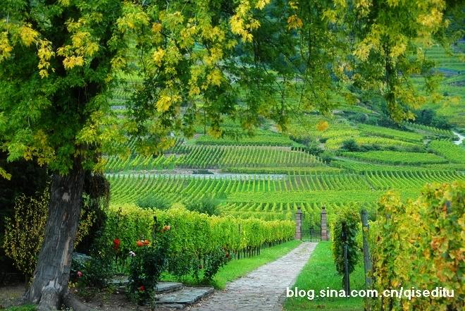 【法国】油画气质,阿尔萨斯的葡萄园