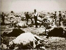 联合国宣称牛瘟已被彻底解决
