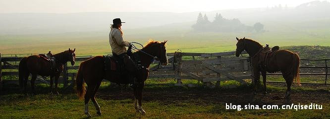【加拿大】Reesor牧场的大日子——烙印日