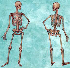 你的骨头是硬还是软?