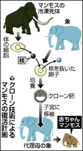 日本团队准备启动猛犸象复活计划