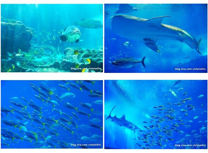 【日本】冲绳狂野之海,绚丽之海