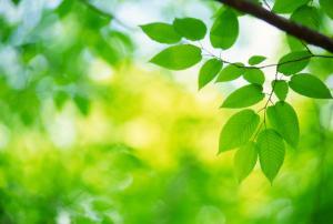 有望投入实用的人造树叶