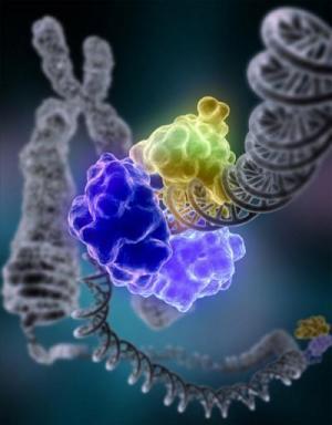 开放基因组资料库的下一步:基因解码