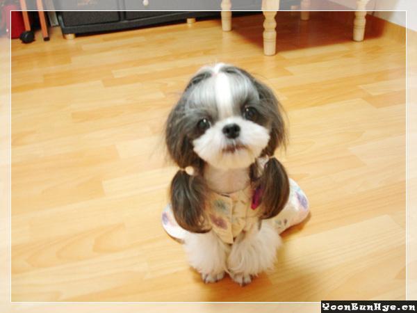 这狗长得不像我,不像我……