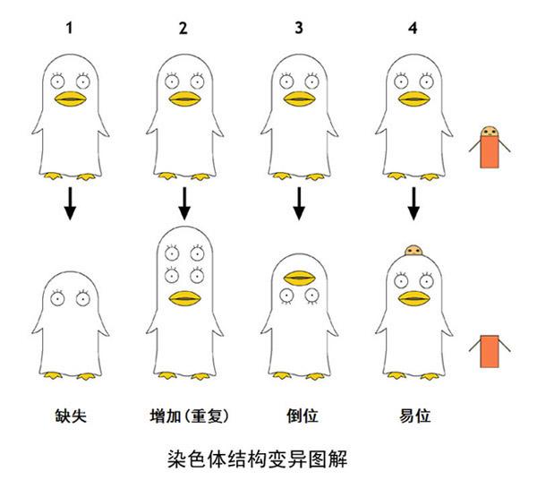 """征文比赛008号 """"科学漫画"""" 结果揭晓"""
