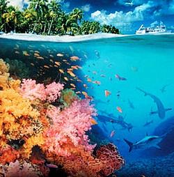 珊瑚白化与全球变暖