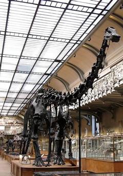 恐龙是怎么变酷的?(七)超级玛丽与卡内基梁龙