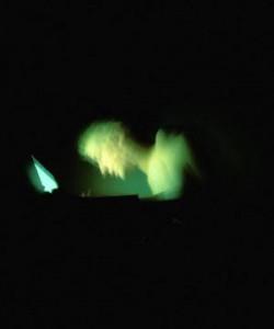 [小红猪]守卫者: 身陷网络围城