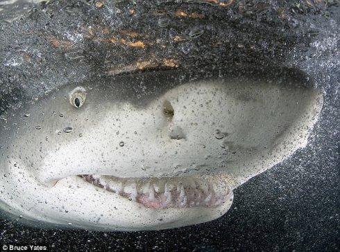 鲨鱼的微笑