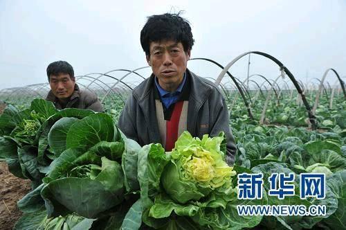 """""""血汗蔬菜""""背后的制度悲剧"""