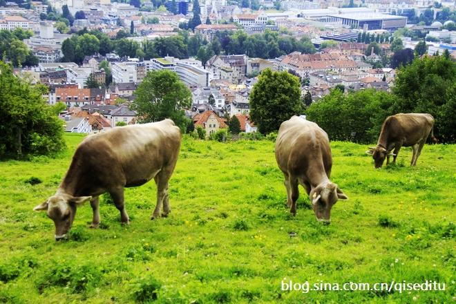 【瑞士】圣加伦的周末