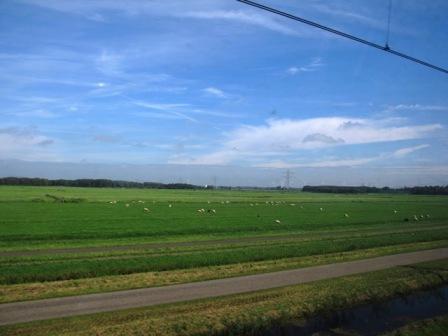 荷兰印象 – 绵羊、农田后面的现代化