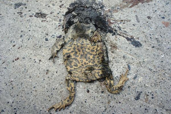 一路上看见好多被压死的蛤蟆。是意味着某人真的要挂了么?