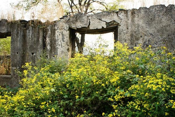 废墟里的小菊花。是在暗示这屋子是搅基的好地方咩?