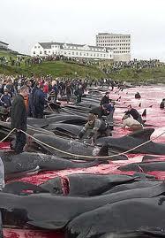 杀死一头领航鲸