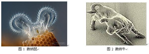 微纳米艺术之十二生肖(配图)