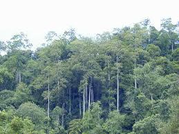 [少儿科普][热带雨林1]谁是雨林的招牌树?