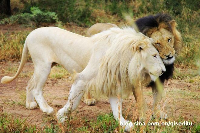 """【南非】狩猎旅行,惊险刺激看非洲""""五大"""""""
