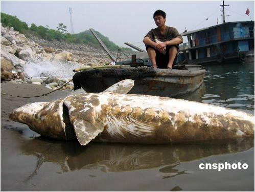 不要以我的名义,灭绝长江鱼类