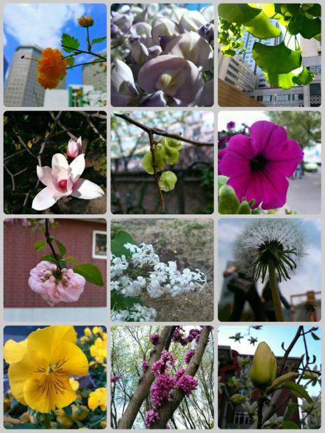 花落春仍在