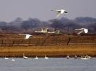 达里诺尔保护区的鱼鸟之争
