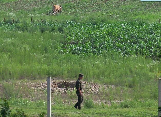 偷拍朝鲜边防军人放狗赶羊