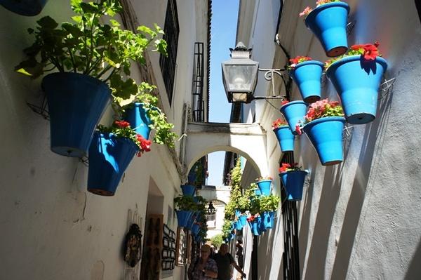 据说如果春天来,花巷满墙都是各种色彩的花花