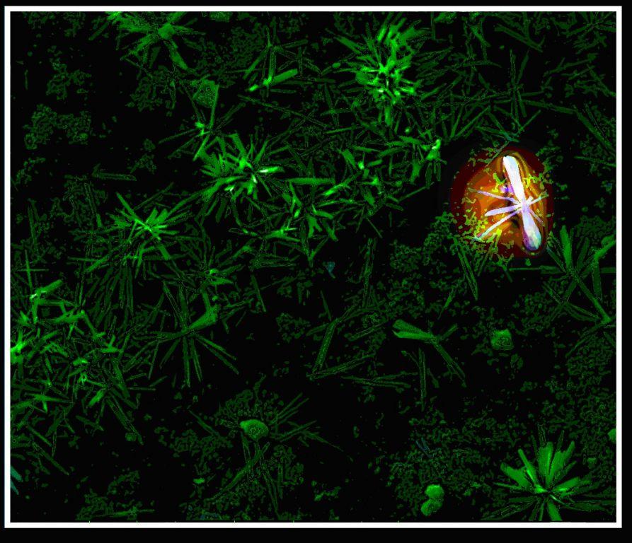 两幅氧化钛纳米花草(照片)