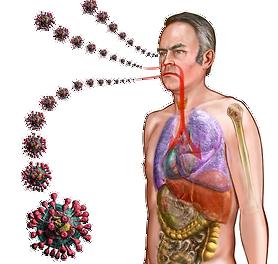 看看人类冠状病毒引起的传染病