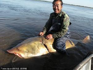 中国最大的淡水鳇鱼什么样