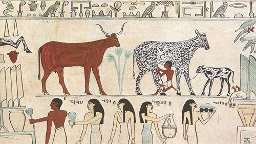 [小红猪]动植物驯化的演化,后果与未来