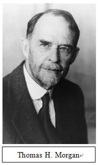 摩尔根与遗传学:研究与教育