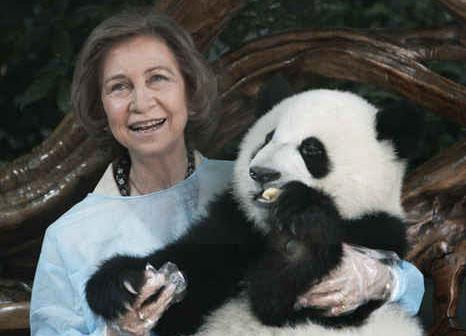 """熊猫外交的""""可爱""""诱惑"""