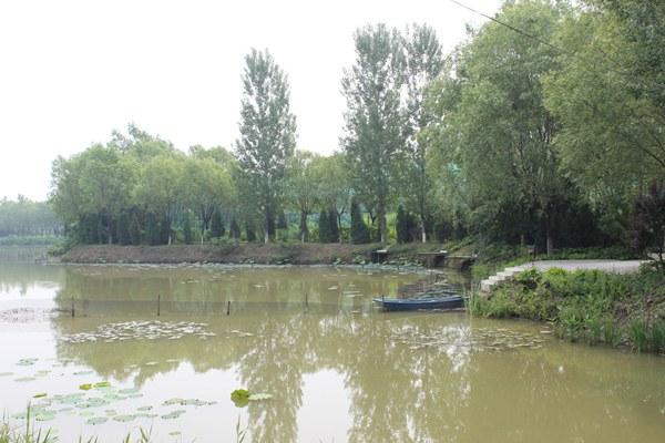 美丽的湿地公园