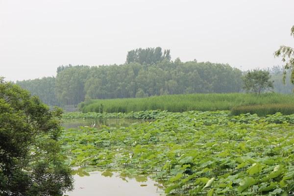 参观翠湖湿地公园