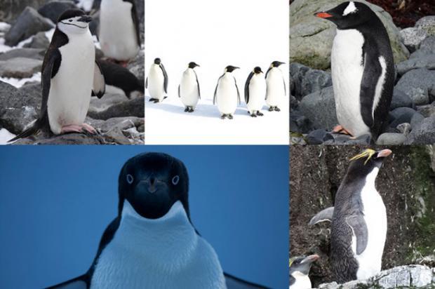 南大洋呼唤MPA系列博客之十  企鹅人格测试