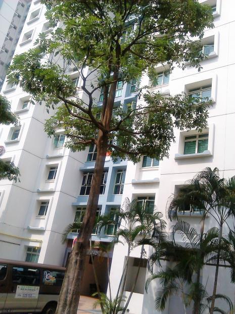 新加坡的楼顶怎么用
