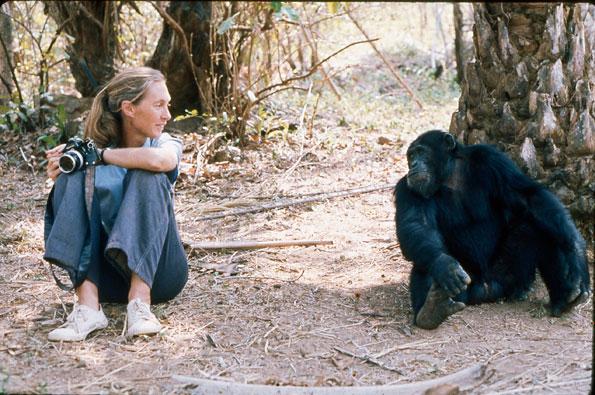 "与""黑猩猩之母""珍妮·古道尔的对话 (Interview with the Chimpanzee Mother)"