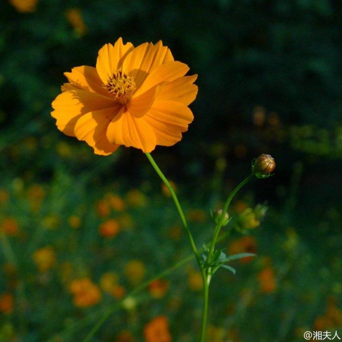 香山有佳人,夜雨化湘君,窗内听雨声,帘外和古音